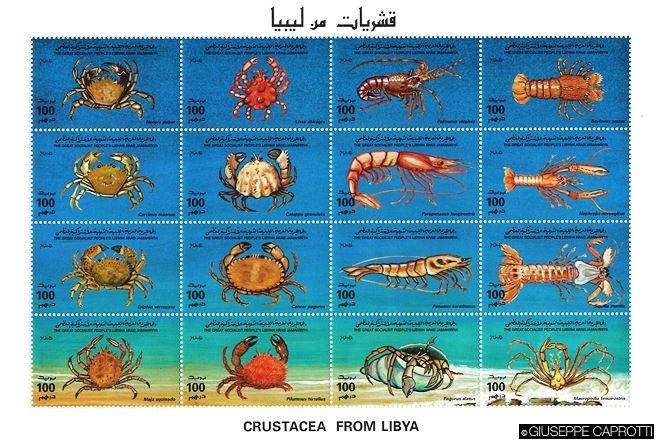 Libia crostacei