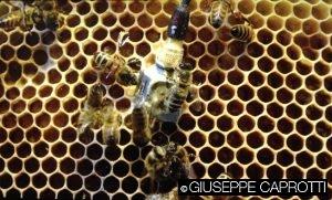api sensore padiglione uk