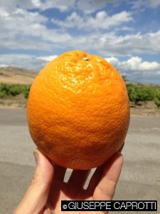 arance magritte