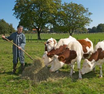 Agricoltura sostenibile l 39 approccio francese for Gruppi politici italiani