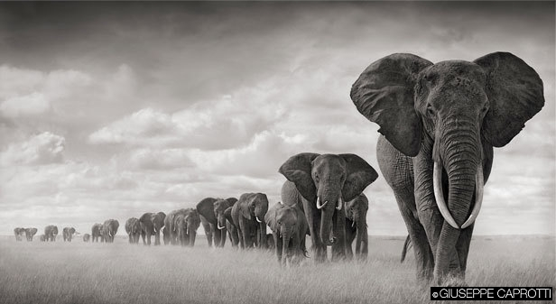 elefanti big life foundation