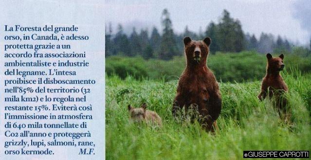 foresta grande orso io donna febbraio 2016 cover