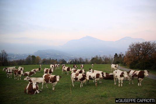l'europe inondèe de lait photo