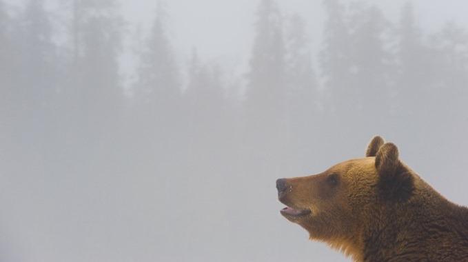 stefano unterthiner orso cover